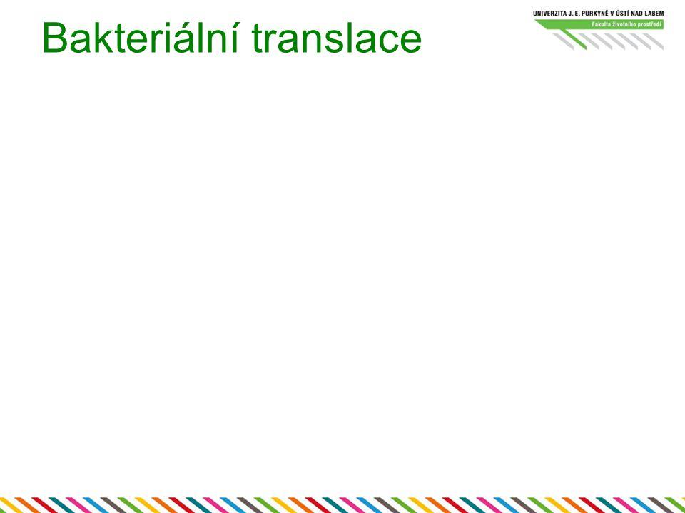 Bakteriální translace