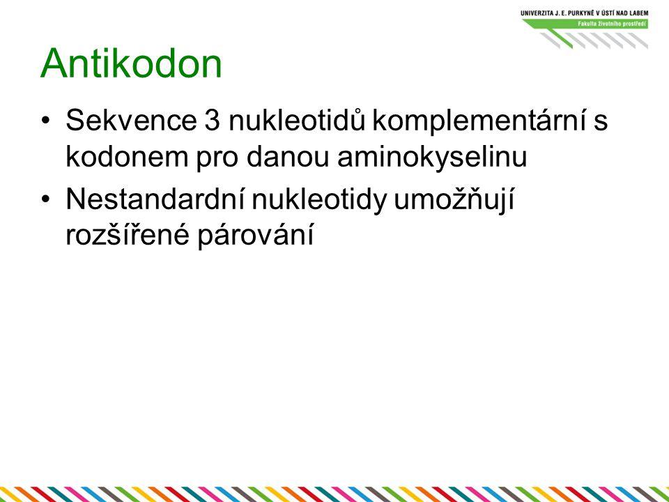 Antikodon Sekvence 3 nukleotidů komplementární s kodonem pro danou aminokyselinu Nestandardní nukleotidy umožňují rozšířené párování