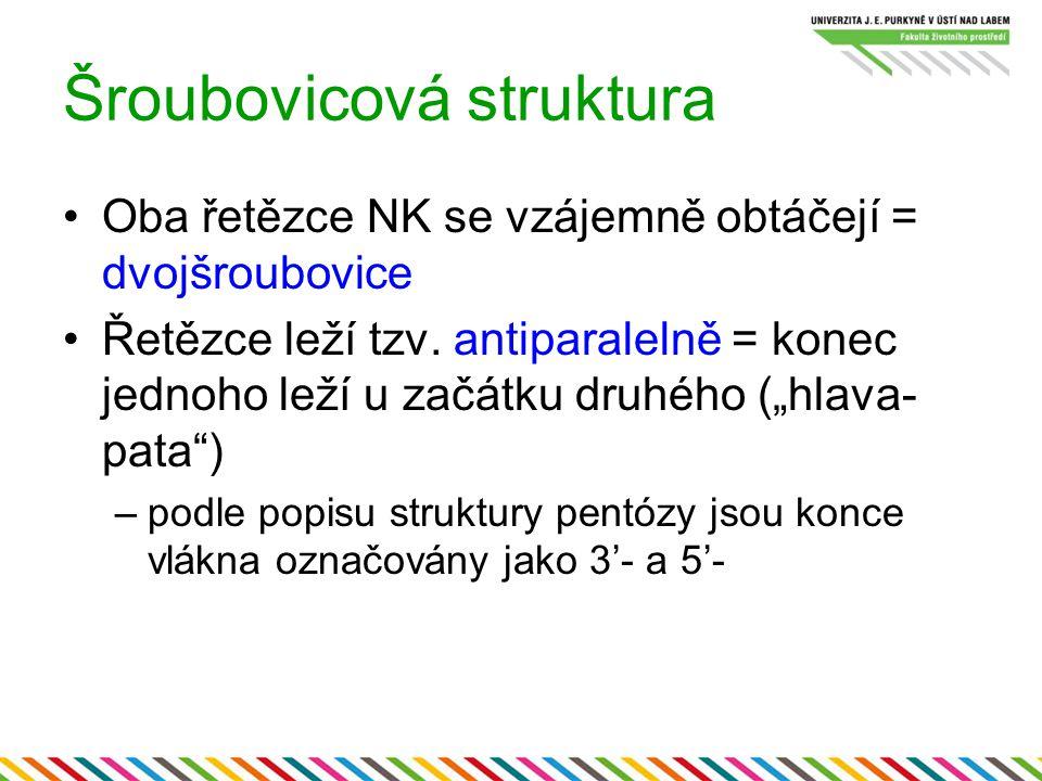 """Šroubovicová struktura Oba řetězce NK se vzájemně obtáčejí = dvojšroubovice Řetězce leží tzv. antiparalelně = konec jednoho leží u začátku druhého (""""h"""