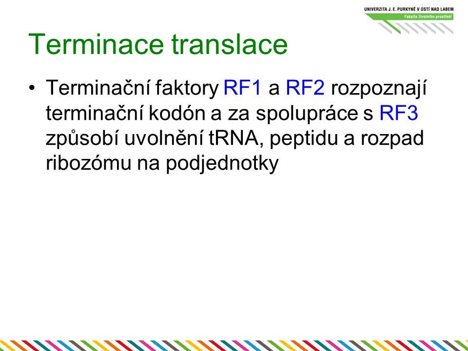 Terminace translace Terminační faktory RF1 a RF2 rozpoznají terminační kodón a za spolupráce s RF3 způsobí uvolnění tRNA, peptidu a rozpad ribozómu na