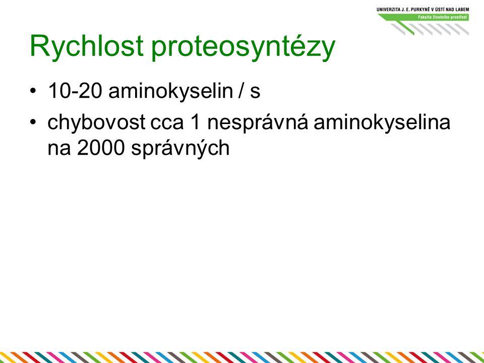 Rychlost proteosyntézy 10-20 aminokyselin / s chybovost cca 1 nesprávná aminokyselina na 2000 správných