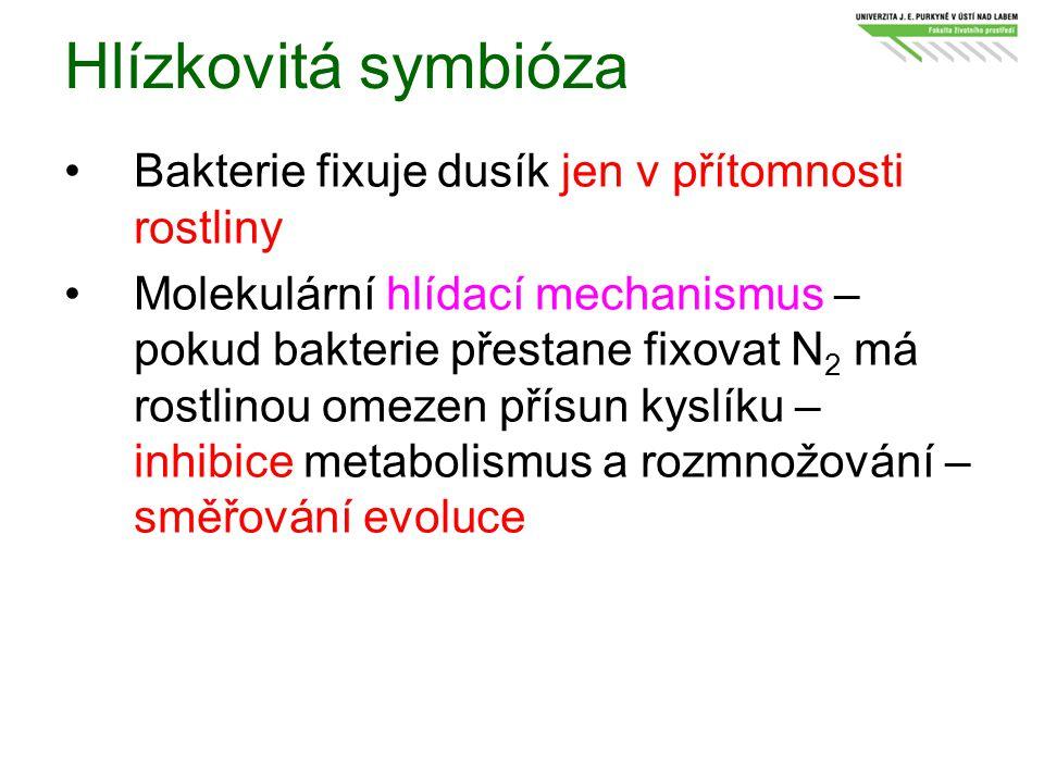 Hlízkovitá symbióza Bakterie fixuje dusík jen v přítomnosti rostliny Molekulární hlídací mechanismus – pokud bakterie přestane fixovat N 2 má rostlino