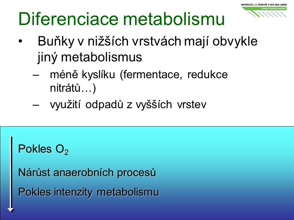 Diferenciace metabolismu Buňky v nižších vrstvách mají obvykle jiný metabolismus –méně kyslíku (fermentace, redukce nitrátů…) –využití odpadů z vyššíc