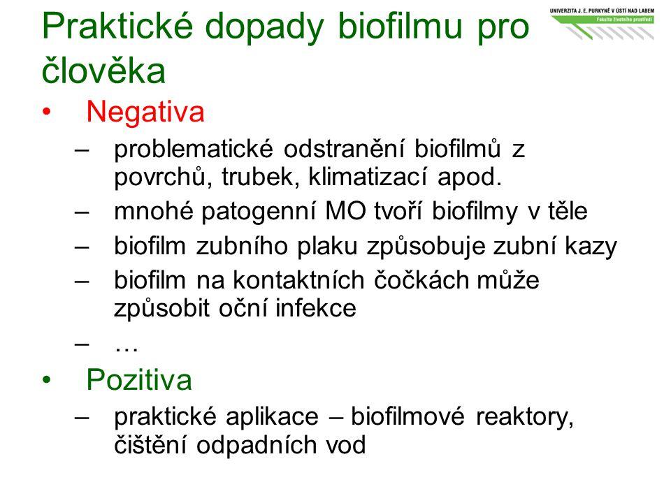 Praktické dopady biofilmu pro člověka Negativa: –problematické odstranění biofilmů z povrchů, trubek, klimatizací apod. –mnohé patogenní MO tvoří biof
