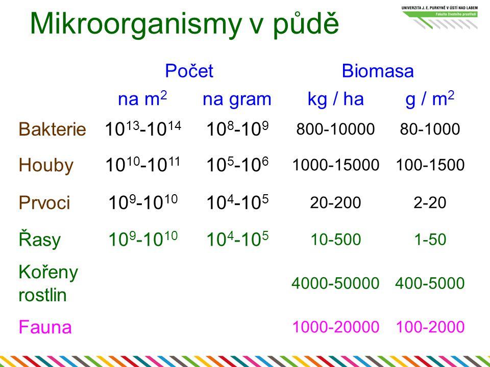 Mikroorganismy v půdě PočetBiomasa na m 2 na gramkg / hag / m 2 Bakterie10 13 -10 14 10 8 -10 9 800-1000080-1000 Houby10 10 -10 11 10 5 -10 6 1000-150