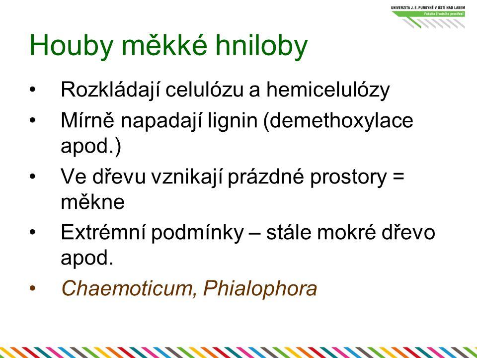 Houby měkké hniloby Rozkládají celulózu a hemicelulózy Mírně napadají lignin (demethoxylace apod.) Ve dřevu vznikají prázdné prostory = měkne Extrémní