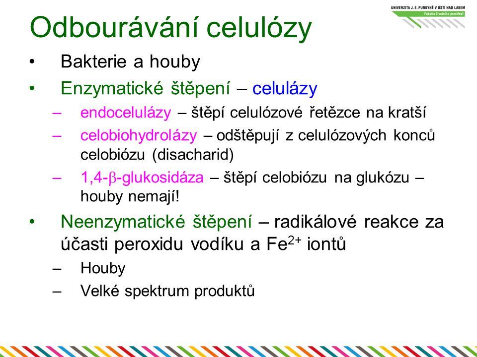 Odbourávání celulózy Bakterie a houby Enzymatické štěpení – celulázy –endocelulázy – štěpí celulózové řetězce na kratší –celobiohydrolázy – odštěpují