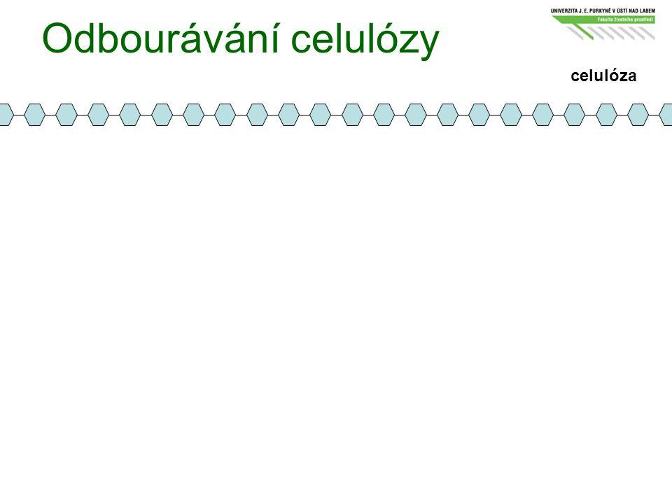 Odbourávání celulózy celulóza