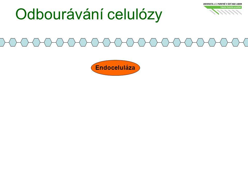Odbourávání celulózy Endoceluláza