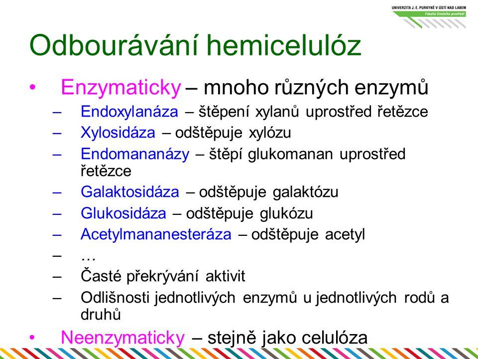 Odbourávání hemicelulóz Enzymaticky – mnoho různých enzymů –Endoxylanáza – štěpení xylanů uprostřed řetězce –Xylosidáza – odštěpuje xylózu –Endomananá