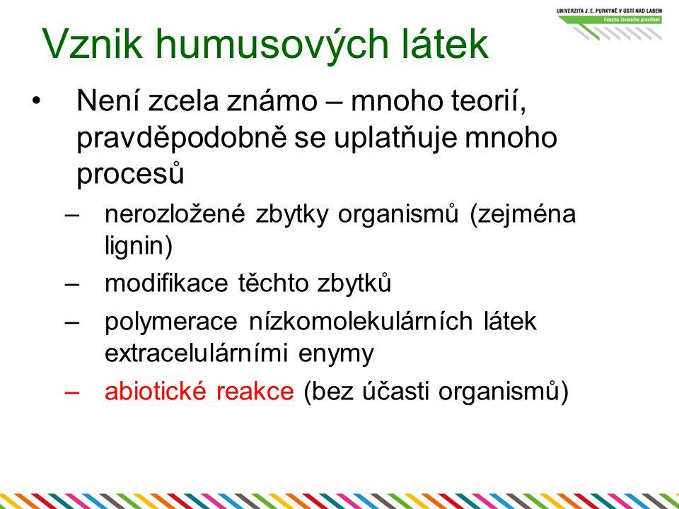 Vznik humusových látek Není zcela známo – mnoho teorií, pravděpodobně se uplatňuje mnoho procesů –nerozložené zbytky organismů (zejména lignin) –modif