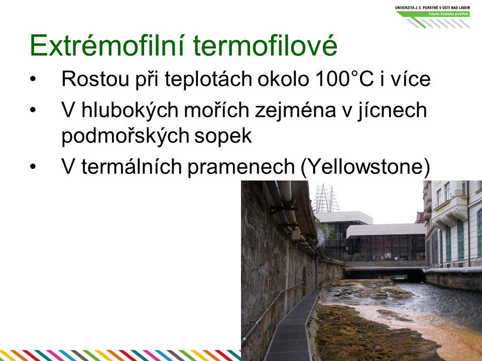 Extrémofilní termofilové Rostou při teplotách okolo 100°C i více V hlubokých mořích zejména v jícnech podmořských sopek V termálních pramenech (Yellow