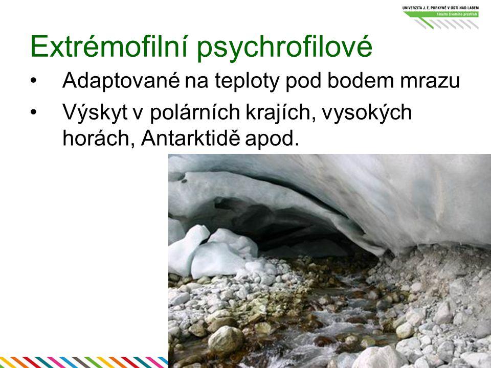 Extrémofilní psychrofilové Adaptované na teploty pod bodem mrazu Výskyt v polárních krajích, vysokých horách, Antarktidě apod.