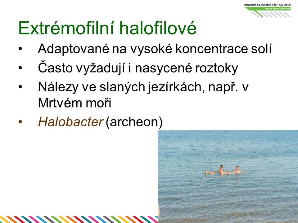 Extrémofilní halofilové Adaptované na vysoké koncentrace solí Často vyžadují i nasycené roztoky Nálezy ve slaných jezírkách, např. v Mrtvém moři Halob