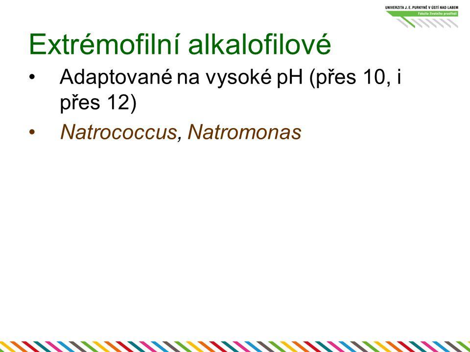 Extrémofilní alkalofilové Adaptované na vysoké pH (přes 10, i přes 12) Natrococcus, Natromonas