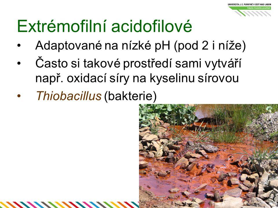 Extrémofilní acidofilové Adaptované na nízké pH (pod 2 i níže) Často si takové prostředí sami vytváří např. oxidací síry na kyselinu sírovou Thiobacil