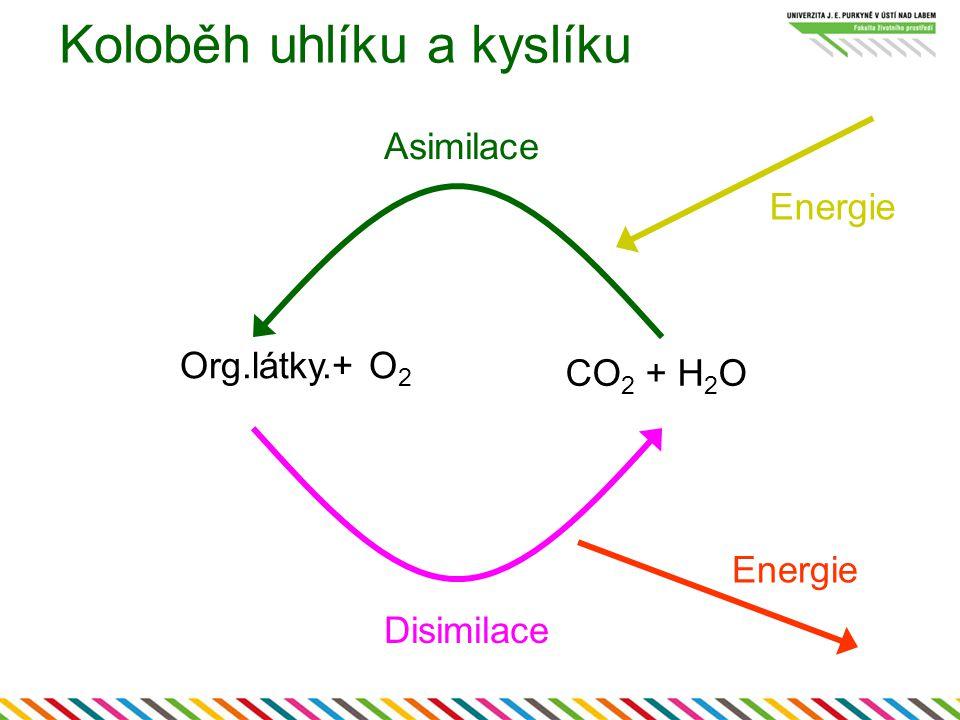 Koloběh uhlíku a kyslíku Org.látky.+ O 2 CO 2 + H 2 O Asimilace Disimilace Energie
