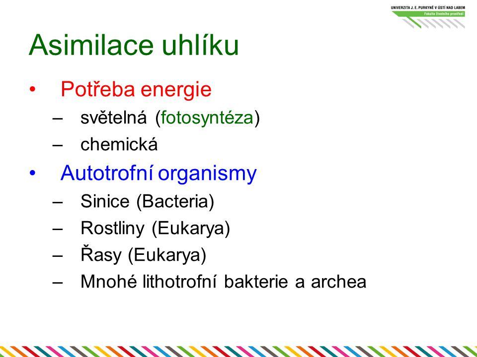 Asimilace uhlíku Potřeba energie –světelná (fotosyntéza) –chemická Autotrofní organismy –Sinice (Bacteria) –Rostliny (Eukarya) –Řasy (Eukarya) –Mnohé