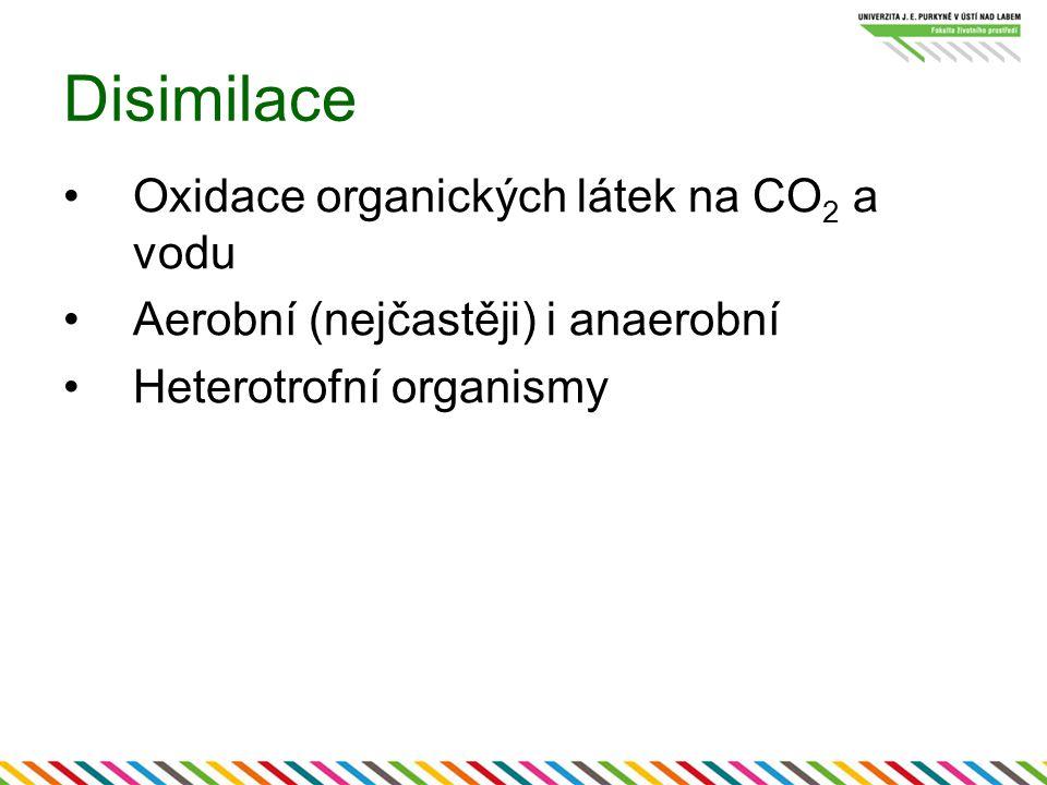 Disimilace Oxidace organických látek na CO 2 a vodu Aerobní (nejčastěji) i anaerobní Heterotrofní organismy