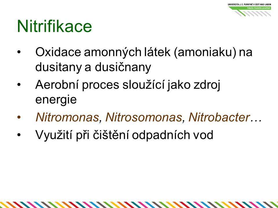 Nitrifikace Oxidace amonných látek (amoniaku) na dusitany a dusičnany Aerobní proces sloužící jako zdroj energie Nitromonas, Nitrosomonas, Nitrobacter