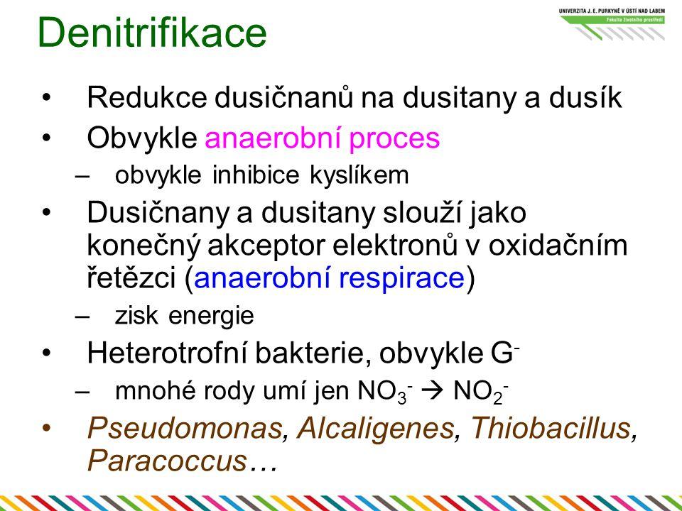 Denitrifikace Redukce dusičnanů na dusitany a dusík Obvykle anaerobní proces –obvykle inhibice kyslíkem Dusičnany a dusitany slouží jako konečný akcep