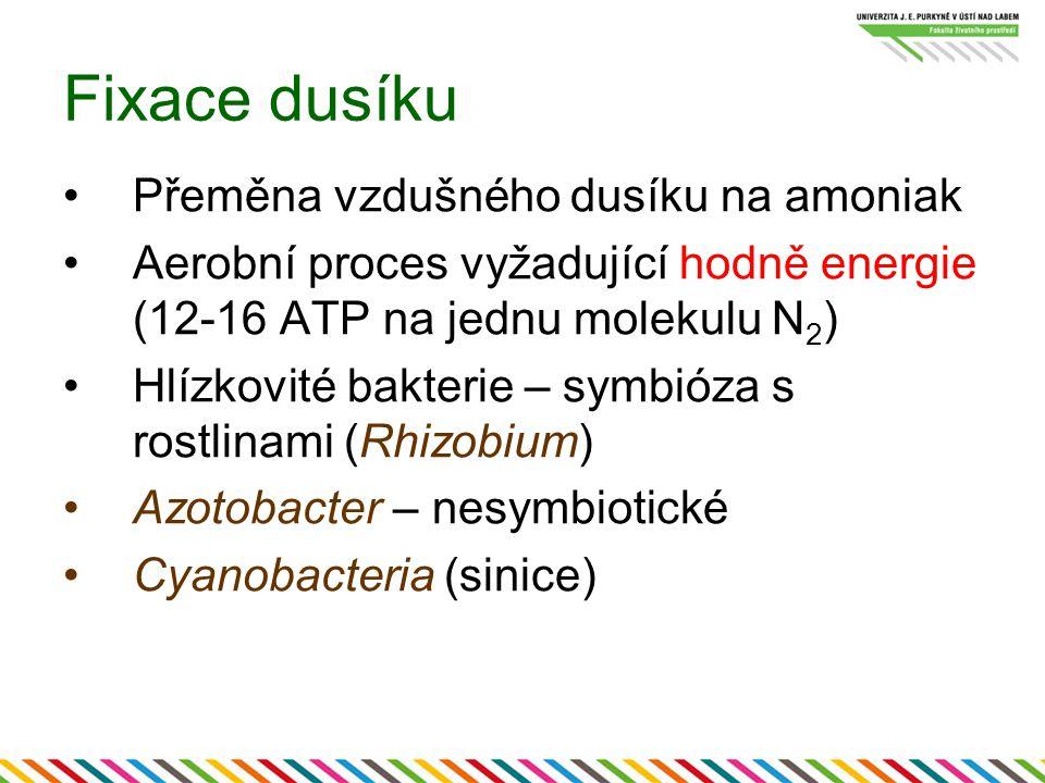 Fixace dusíku Přeměna vzdušného dusíku na amoniak Aerobní proces vyžadující hodně energie (12-16 ATP na jednu molekulu N 2 ) Hlízkovité bakterie – sym