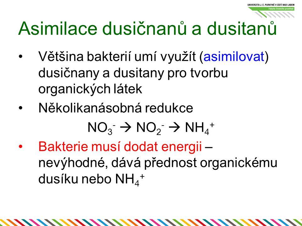 Asimilace dusičnanů a dusitanů Většina bakterií umí využít (asimilovat) dusičnany a dusitany pro tvorbu organických látek Několikanásobná redukce NO 3