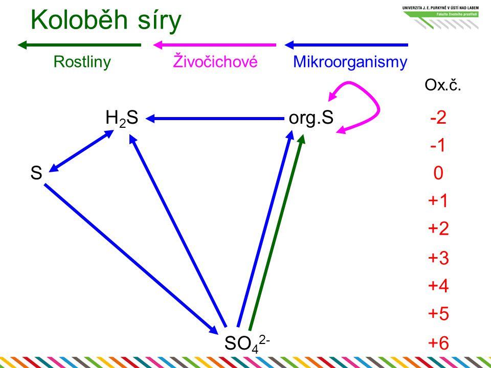 H2SH2Sorg.S-2 S0 +1 +2 +3 +4 +5 SO 4 2- +6 RostlinyŽivočichovéMikroorganismy Koloběh síry Ox.č.
