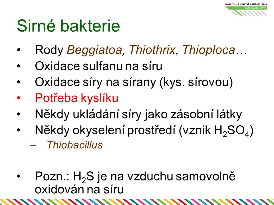 Sirné bakterie Rody Beggiatoa, Thiothrix, Thioploca… Oxidace sulfanu na síru Oxidace síry na sírany (kys. sírovou) Potřeba kyslíku Někdy ukládání síry