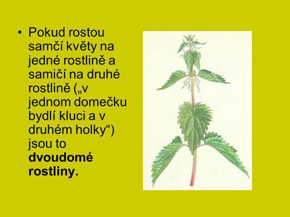 """Pokud rostou samčí květy na jedné rostlině a samičí na druhé rostlině (""""v jednom domečku bydlí kluci a v druhém holky"""") jsou to dvoudomé rostliny."""