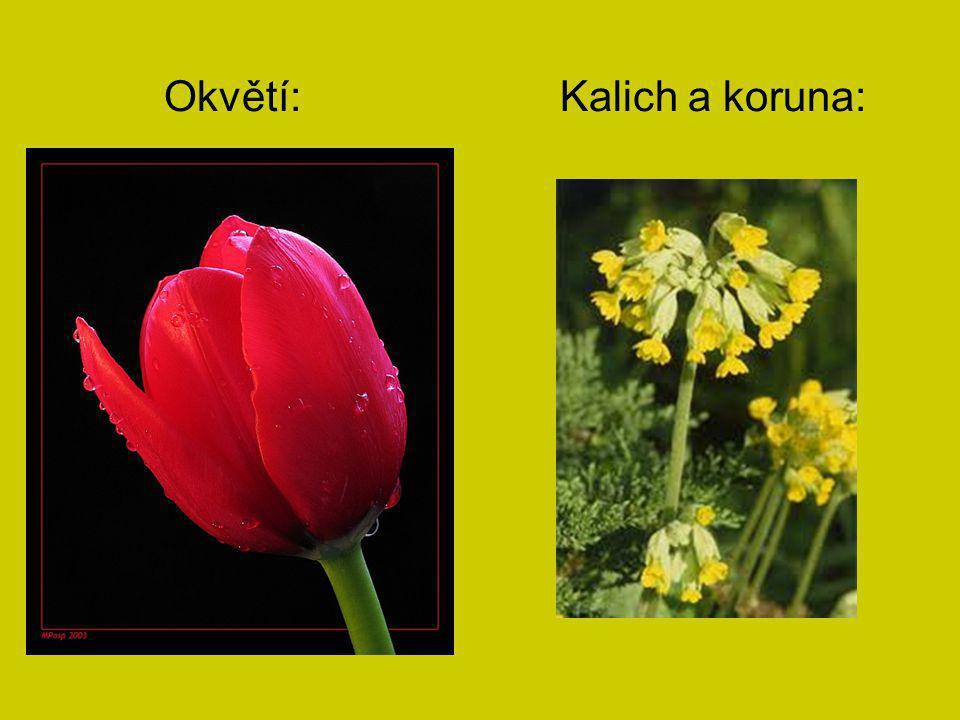 Některé květy mohou být krásně zbarveny.Také mohou obsahovat sladkou šťávu – nektar.