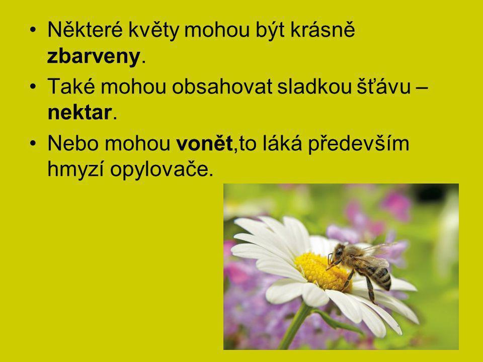 Některé květy mohou být krásně zbarveny. Také mohou obsahovat sladkou šťávu – nektar. Nebo mohou vonět,to láká především hmyzí opylovače.