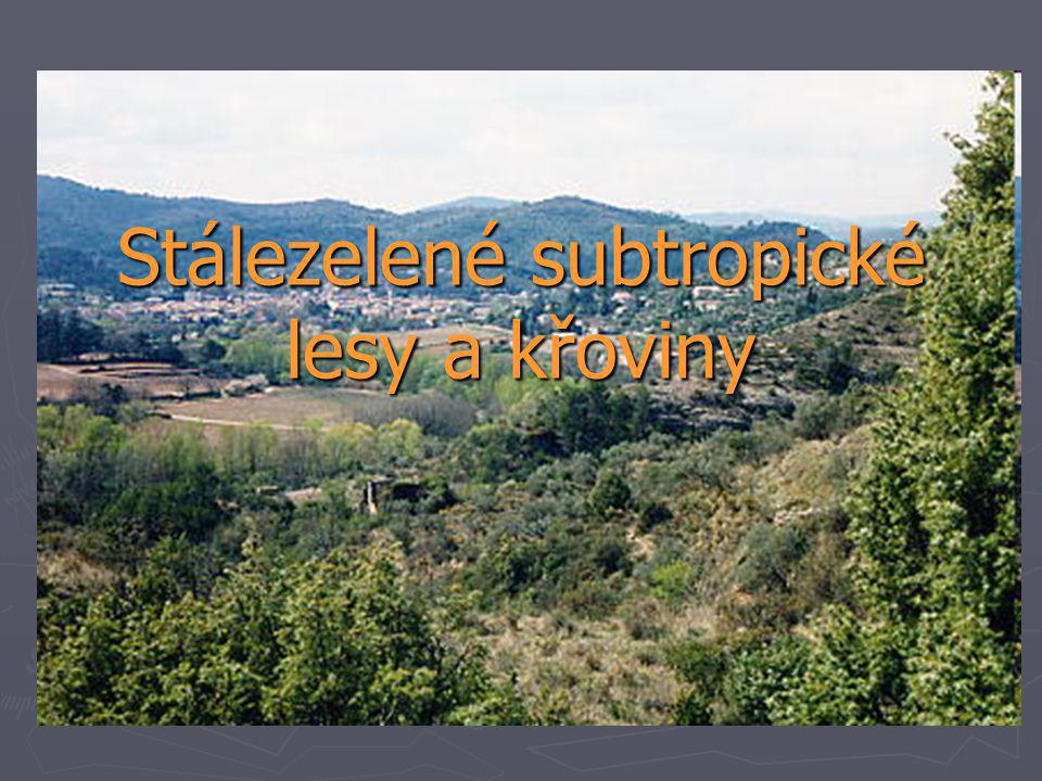 Stálezelené subtropické lesy a křoviny