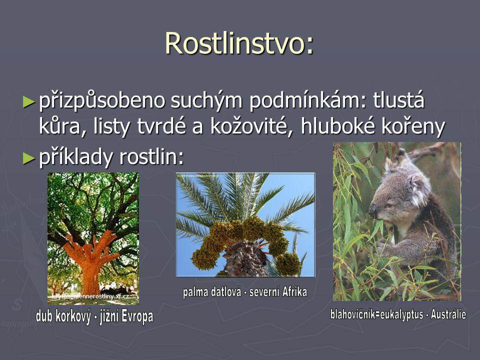 Rostlinstvo: ► přizpůsobeno suchým podmínkám: tlustá kůra, listy tvrdé a kožovité, hluboké kořeny ► příklady rostlin: krytosemennerostliny.xf.cz
