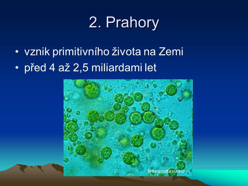3. Starohory první živočichové před 2,5 miliardami až 570 miliony lety ao-institut.cz