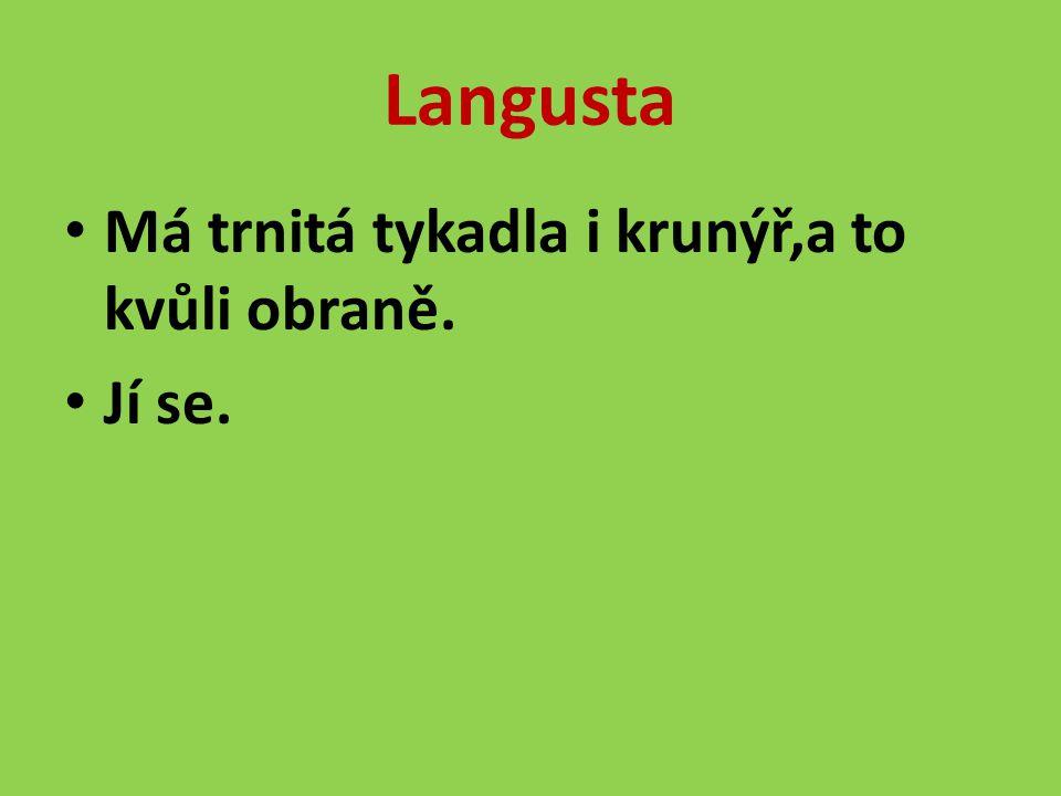 Langusta Má trnitá tykadla i krunýř,a to kvůli obraně. Jí se.
