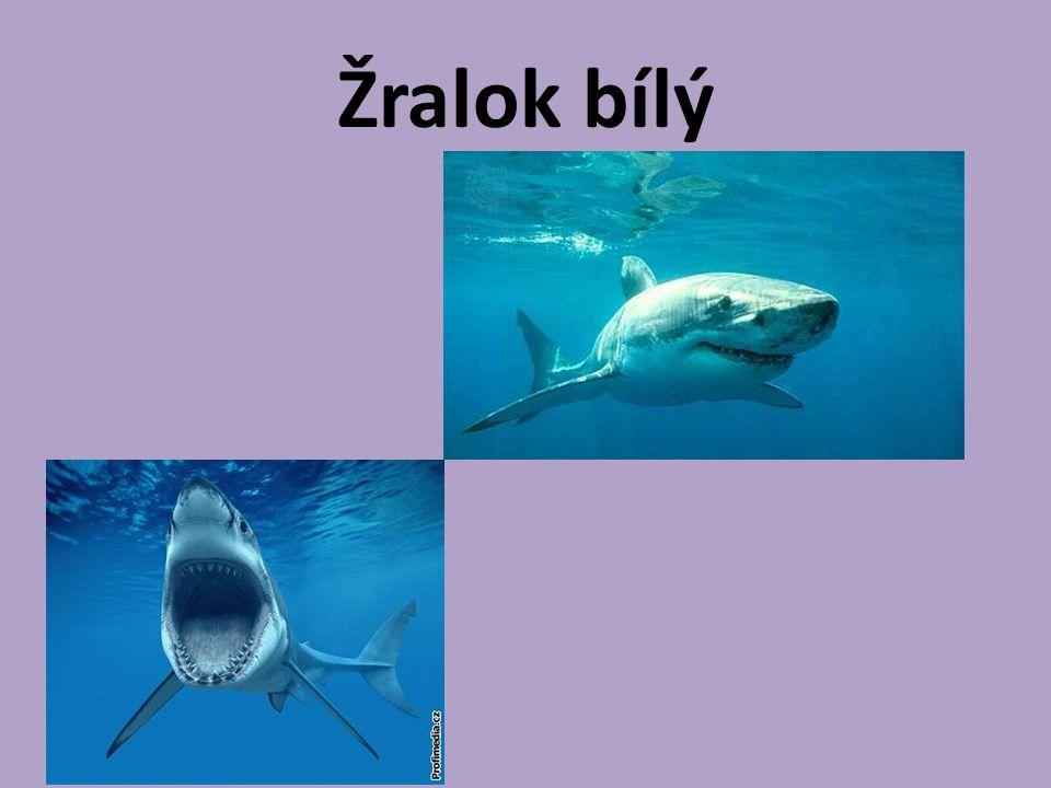 Zdroje : http://prirodopis.zsvelhartice.cz/slozka/paryb y/chimery.html http://paryby.wu.cz/zastupci.html http://vezverinci.blog.cz/0804/parejnok- elektricky http://zivazeme.cz/atlas-paryb/zralok- obrovsky http://zralociii.ic.cz/zralokobrovsky.html