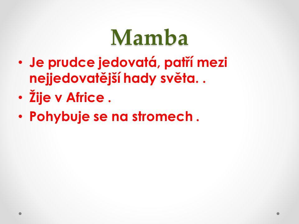 Mamba Je prudce jedovatá, patří mezi nejjedovatější hady světa.. Žije v Africe. Pohybuje se na stromech.