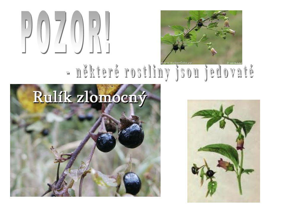 www.slunberun.webovastranka.czwww.slunberun.webovastranka.cz sluníčko www.horoskopnamiru.czwww.horoskopnamiru.cz slunečnice www.mesta.obce.czwww.mesta.obce.cz koupaliště www.paddykellypage.blog.czwww.paddykellypage.blog.cz vlčí mák www.agroweb.czwww.agroweb.cz žně www.pripravy.estranky.czwww.pripravy.estranky.cz lesní maliny, ostružiny, brusinky, borůvky, jahody www.naturfoto.czwww.naturfoto.cz rulík zlomocný