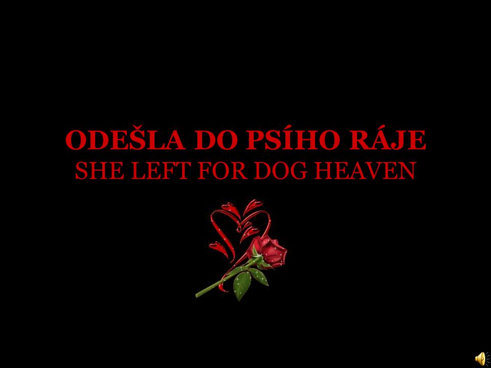 ODEŠLA DO PSÍHO RÁJE SHE LEFT FOR DOG HEAVEN