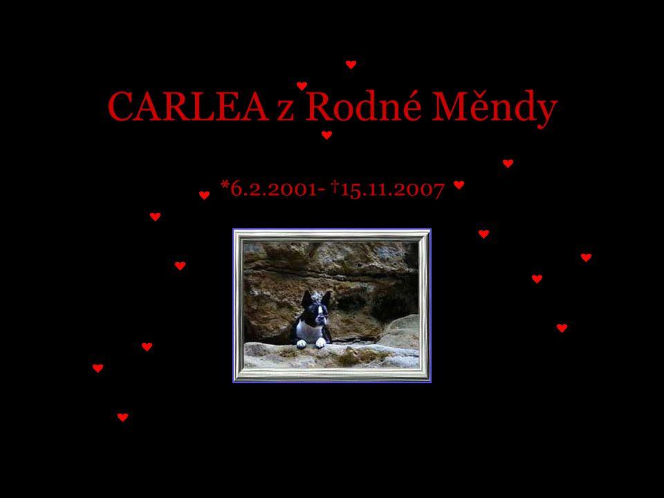 CARLEA z Rodné Měndy *6.2.2001- †15.11.2007