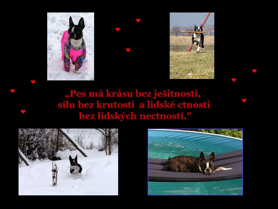 """""""Pes má krásu bez ješitnosti, sílu bez krutosti a lidské ctnosti bez lidských nectností."""