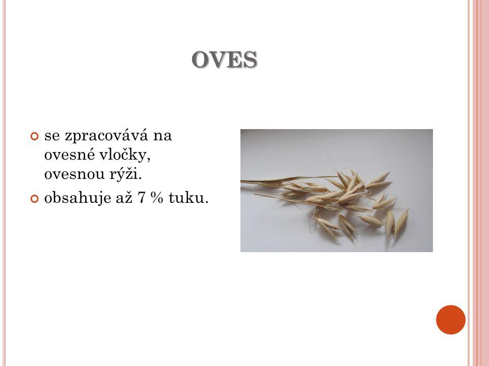 OVES se zpracovává na ovesné vločky, ovesnou rýži. obsahuje až 7 % tuku.