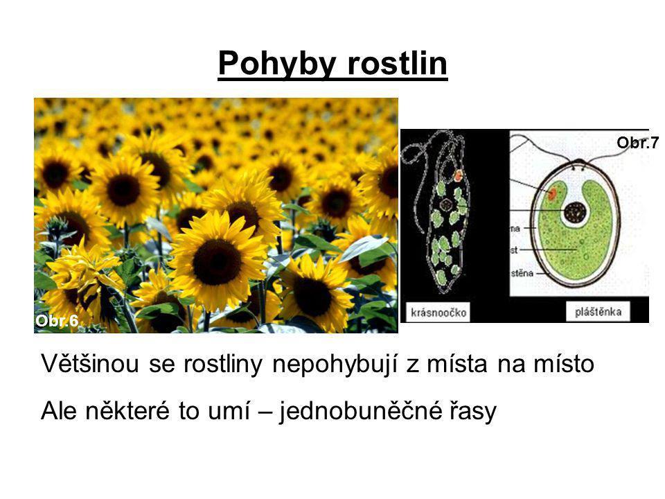 Pohyby rostlin Většinou se rostliny nepohybují z místa na místo Ale některé to umí – jednobuněčné řasy Obr.6 Obr.7