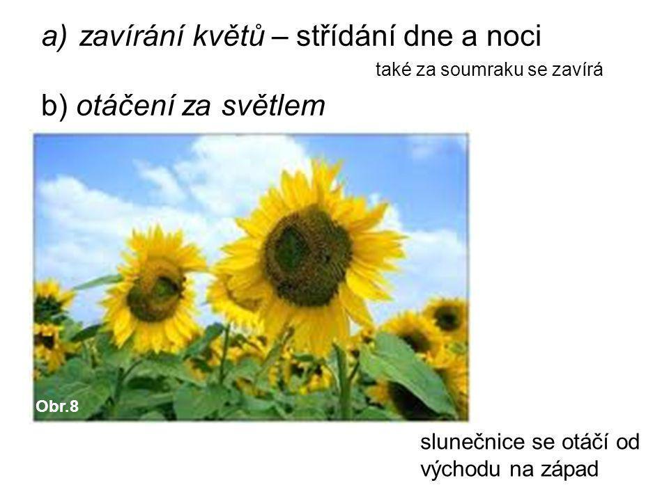 a)zavírání květů – střídání dne a noci také za soumraku se zavírá b) otáčení za světlem slunečnice se otáčí od východu na západ Obr.8