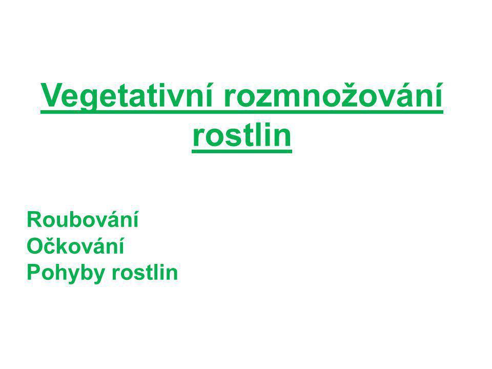 Vegetativní rozmnožování rostlin Roubování Očkování Pohyby rostlin