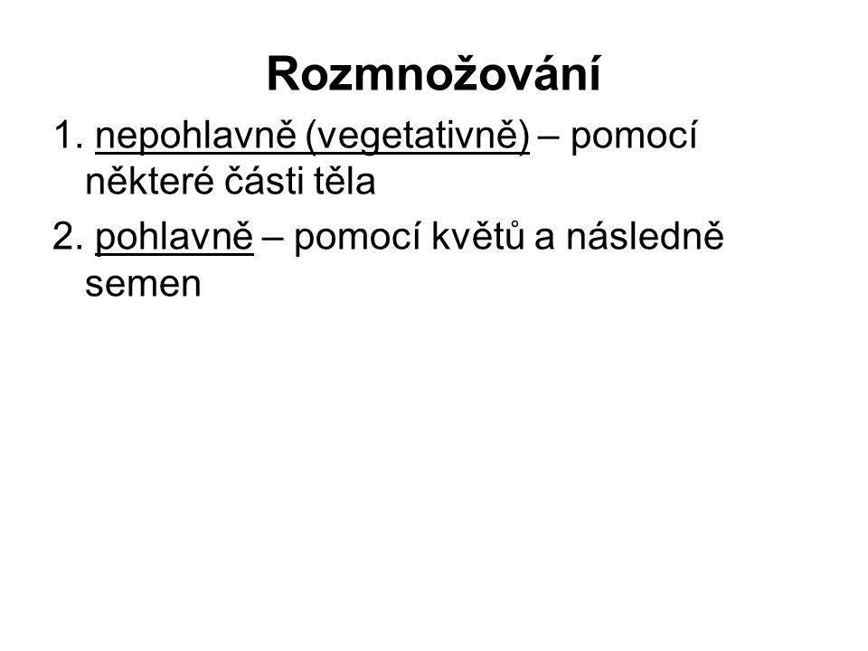 Rozmnožování 1.nepohlavně (vegetativně) – pomocí některé části těla 2.