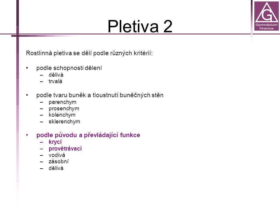 Pletiva 2 Rostlinná pletiva se dělí podle různých kritérií: podle schopnosti dělení –dělivá –trvalá podle tvaru buněk a tloustnutí buněčných stěn –par