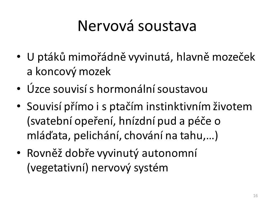 Nervová soustava U ptáků mimořádně vyvinutá, hlavně mozeček a koncový mozek Úzce souvisí s hormonální soustavou Souvisí přímo i s ptačím instinktivním životem (svatební opeření, hnízdní pud a péče o mláďata, pelichání, chování na tahu,…) Rovněž dobře vyvinutý autonomní (vegetativní) nervový systém 16