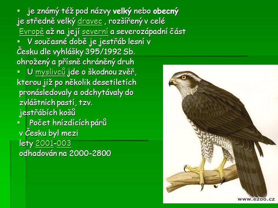  je známý též pod názvy velký nebo obecný je středně velký dravec, rozšířený v celé dravec Evropě až na její severní a severozápadní část Evropě až n